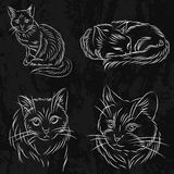 Set koty w nakreślenie stylu Ja może używać dla książek lub loga Zdjęcia Stock