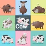 Set krowy rodzina Zdjęcia Stock