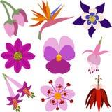 Set kwiat ikony w Wektorowym formacie Obrazy Stock