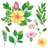 Set kwiaty, gałąź i wianek ręka, malował z nafcianą pandą Zdjęcie Stock