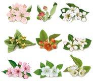 Set kwiaty na owocowych drzewach ilustracja wektor
