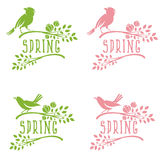 Set of labels of spring birds in branches  leaves and flower Royalty Free Stock Photos