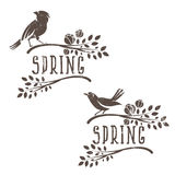 Set of labels of spring birds in branches  leaves and flower Stock Image