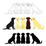 Set of labrador retriever group Stock Photography
