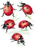 Set of ladybird Stock Image