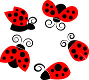 A set of ladybirds in different poses Royalty Free Stock Images