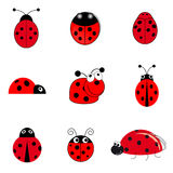 Set of ladybugs Royalty Free Stock Photography