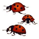 Set of 3 ladybugs Stock Image