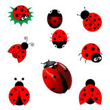 Set of ladybugs Stock Image