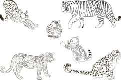 A set of  large predatory cat. Vector illustration Stock Photography