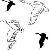Set latające dzikie kaczki również zwrócić corel ilustracji wektora Zdjęcie Royalty Free