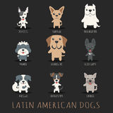 Set of latin american dogs Stock Photos
