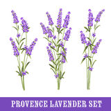 Set of lavender Royalty Free Stock Photo