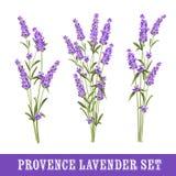 Set of lavender Royalty Free Stock Photo