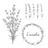 Vector Botanical illustration bundle. Set of lavender flowers elements. Collection of lavender wreaths, bouquets and branches on a white background. Vector stock illustration