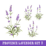 Set of lavender flowers elements Royalty Free Stock Image