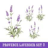 Set of lavender flowers elements. Vintage set of lavender flowers elements. Botanical illustration. Collection of lavender flowers on a white background Royalty Free Stock Image