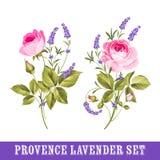 Set of lavender flowers elements. Vintage set of lavender flowers elements. Botanical illustration. Collection of lavender flowers on a white background Royalty Free Stock Photos