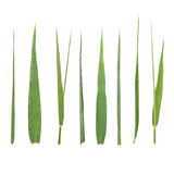 Set leaf cane isolated on white Stock Photo