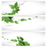 Set of leaf concept banner background Stock Images