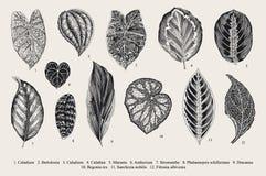 Set Leaf. Exotics. Stock Images