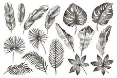 Hand drawn branches and leaves of tropical plants. Black floral set isolated on white background. High detailed royalty free stock image