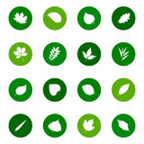 Set of leaf icons on color backgrounds,  illustration. Collection of leaf icons on color backgrounds,  illustration Royalty Free Stock Photo
