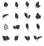 Set of leaf icons on white background Royalty Free Stock Images