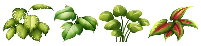 Set of leaf plant stock photos