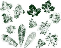 Set of leaf prints isolated on white background. Green stamp ink. Vector. vector illustration