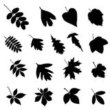 Set of leaf silhouettes Royalty Free Stock Image