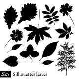 Set of Leaf Silhouettes. Isolated on white. Stock Photography