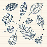 Set of leaf sketch for you design Royalty Free Stock Photos