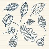 Set of leaf sketch for you design Royalty Free Stock Photos