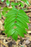 Set of leaf in tropical rain forest, Thailand Stock Photo