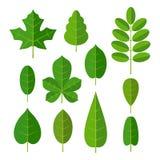 Set leaf. Vector flat color illustration. Isolated white background Stock Photo