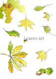 Set of leaves. Fully editable decorative vector illustration Royalty Free Stock Photos