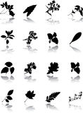 The set of leaves Stock Photo