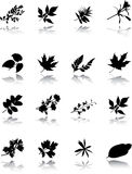 The set of leaves Stock Photos