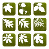 Set of leaves. Set of white leaves' silhouettes on green background Royalty Free Stock Photos