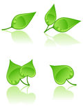 Set of leaves. The set of leaves icons Stock Photography