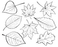 Set of leaves Royalty Free Stock Image