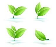 Set of leaves. Set of green leaves on water vector illustration