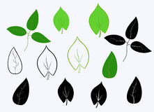 Set of leaves Royalty Free Stock Photo