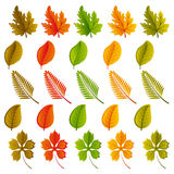 Set of leaves Stock Photo