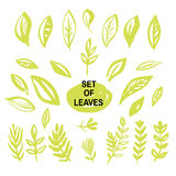 Set of leaves1 Royalty Free Stock Photography