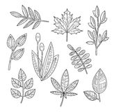 Set of Leaves and Branches in Handdrawn Style Royalty Free Stock Images