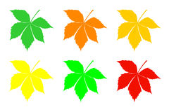 A set of leaves of chestnut. Stock Photography