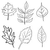 Set of leaves design elements. Vector Stock Photos