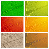 Set of leaves Royalty Free Stock Images